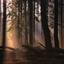 Het licht door de bomen