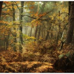 autumn collors
