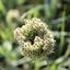 Bijzondere plant