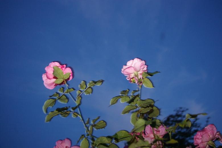 """mijn eerste flits foto - vandaag genomen in mijn tuintje in amsterdam<br /> <br /> leuk resultaat<img  src=""""/images/smileys/tongue.png""""/>"""