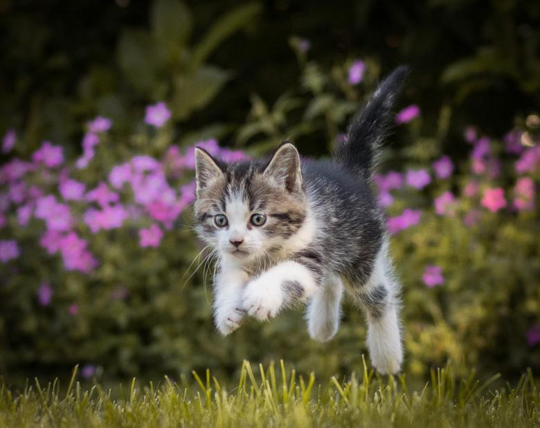 Jump! - Spelende kitten achter een balletje aan