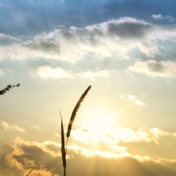 door de zon gegroeit