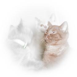 Drie kittens.