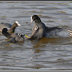 Amok in de polder (1)