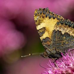 Feel free like a butterfly