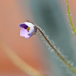 Heel klein bloemetje