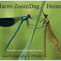 ZoomDag Heino