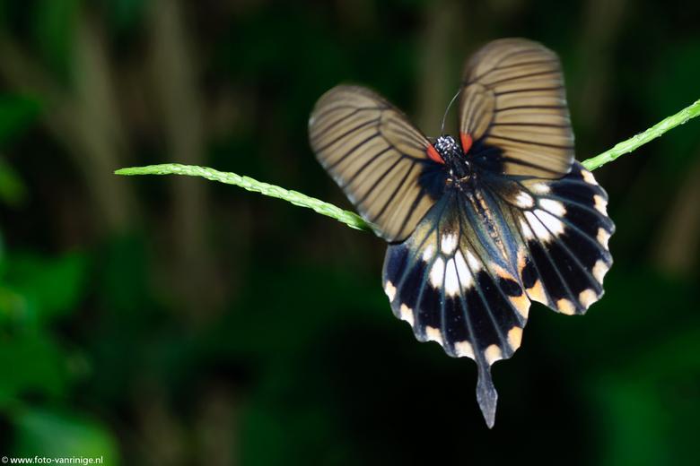 Vlinder - Deze foto is genomen in de vlindertuin in Havelte
