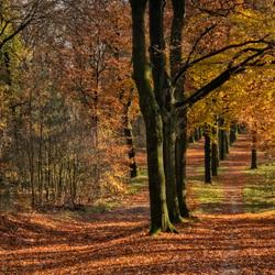Herfst..landgoed Warnsborn 1