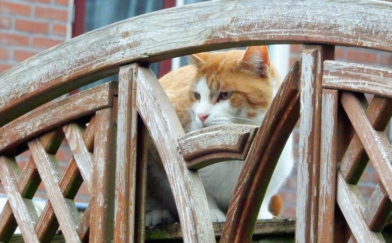 wie woont hier? - de kat komt even kijken of er nog een lekker hapje te halen is.  foto is van november 2018<br /> groetjes, fijne zondag en blijf op