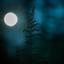 donkere dagen in het bos