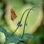 Vlinder vliegend 2