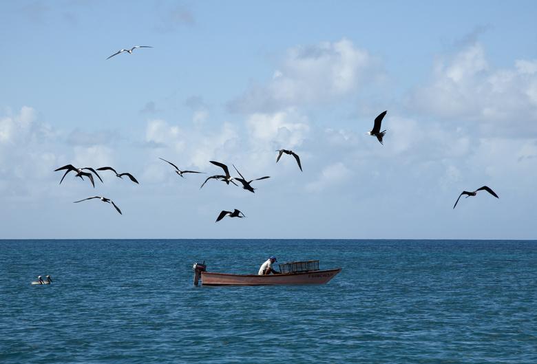 Visser op de Caribische zee - Een visser omringt met vogels midden op de de caribische zee.