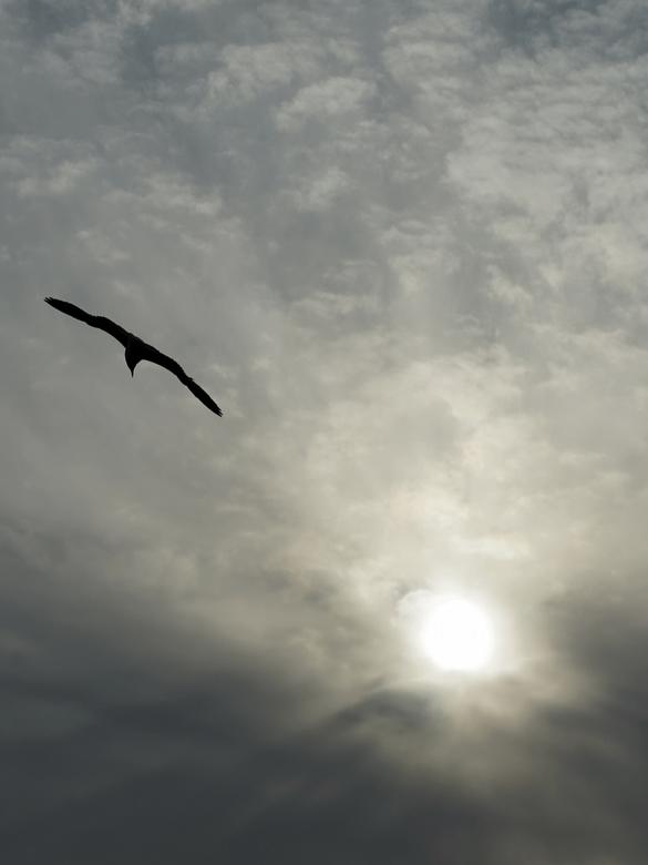 20190516_004600meeuw tegenlicht en wolken - Meeuw tegenlicht avond