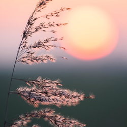 Sunset Friesland