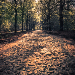 The road to the forest