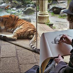 De tekenaar