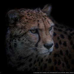 De cheetah man