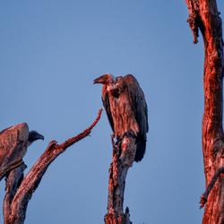 De portiers van Kruger National Park