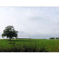 Sober landschap