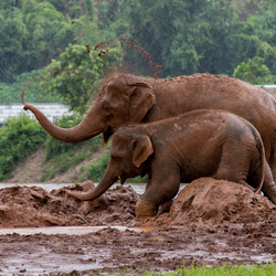 Elephant nature park - Thailand
