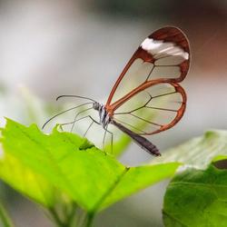 Vlinders aan de Vliet in Leidschendam