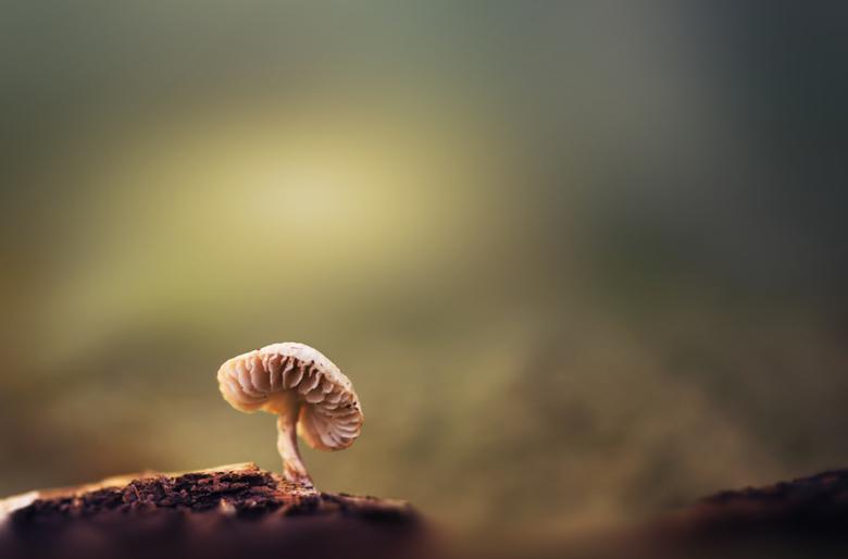 Into the light - Nog een paddenstoeltje van afgelopen paddenstoelenzoomdag,  in de bossen van Dorst