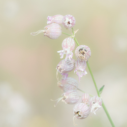 Veld bloem