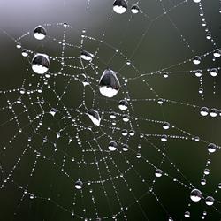 Diamantjes in het web