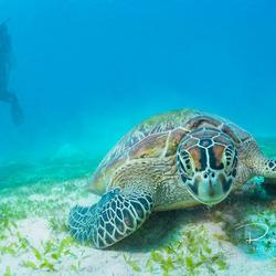 Schildpad bekijkt zijn reflectie in de dome poort