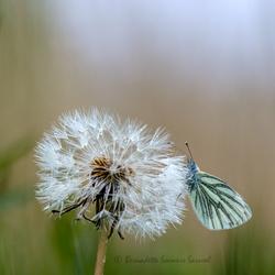 Waar slapen de andere vlinders?
