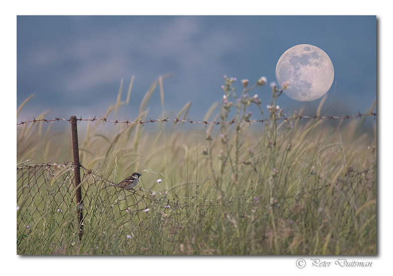 Enjoying full moon - ..