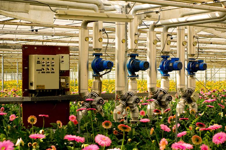 Kom in de kas 01 - Op 31 maart en 1 april 2007 was het weer 'Kom in de kas', een uitgelezen moment om de productie van bloemen en groenten o
