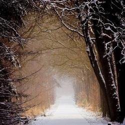 winters gangpad