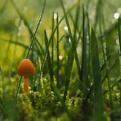 Small mushroom in a big world.
