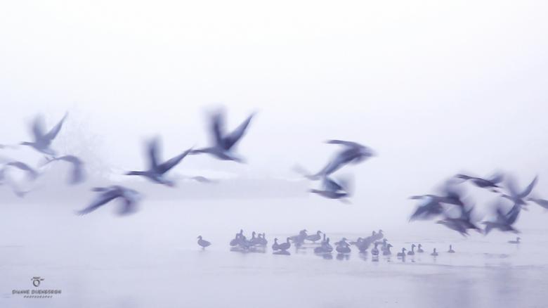 Birds in the winter... - Een heerlijke tegenhanger maar ook gelijkenis van mijn vorige foto. Waar het beeld uit warme kleuren bestaat, zijn het hier a