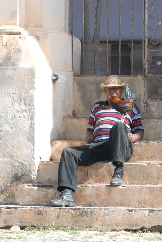 Portret cubaan met haan - In de stad Trinidad op Cuba zat deze man samen met zijn haan op de trap van de kerk.
