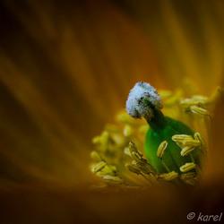 bloemenhart2