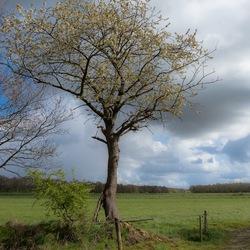 lenteboom