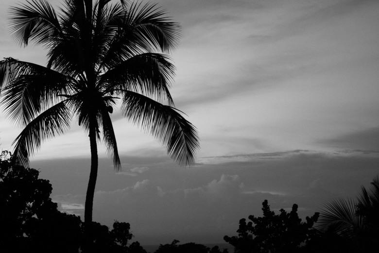 Palmboom - Uitzicht uit hotelkamer in de Dominicaanse Republiek. Deze is zwart wit genomen, niet gemaakt.