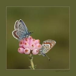 Little butterfly * Zoom