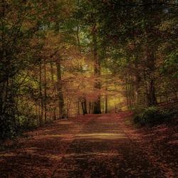 Herfst-Sonsbeekpark.4