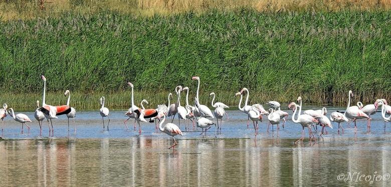 Flamingo's.