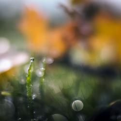 Druppels in de herfst