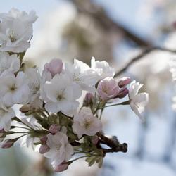 Leven zonder liefde is als een boom zonder bloesem