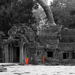 Monikken in Ankor Wat