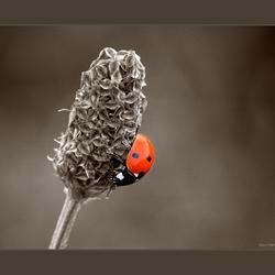 Love Bug!!