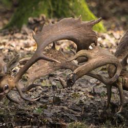 herten in de brons