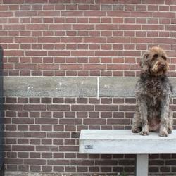 De wachtende hond (6)