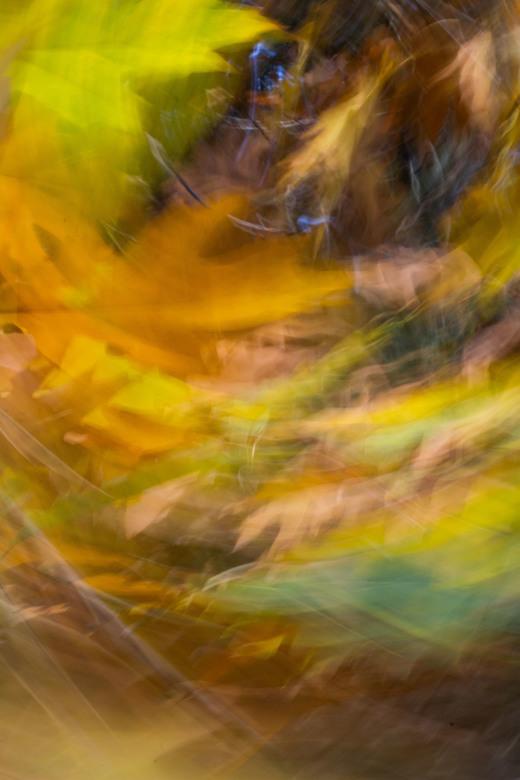 Herfstbladeren  - Een abstracte weergave van herfstbladeren (Amerikaanse Eik) in beweging.